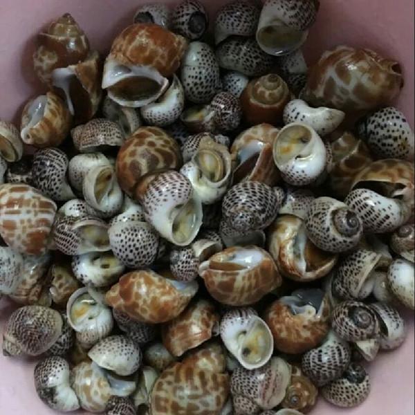 黄螺的做法_白蜜黄螺的做法_白蜜黄螺怎么做